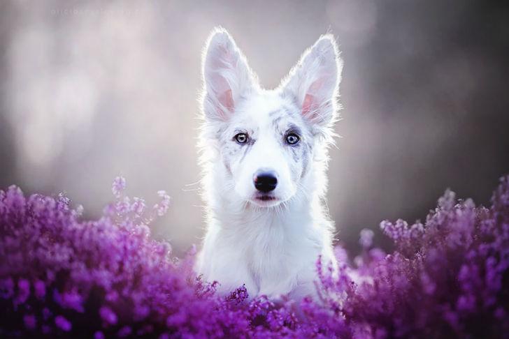 самые красивые фото собак