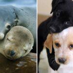 Мы тут обнаружили, что морские котики на самом деле… морские собачки!