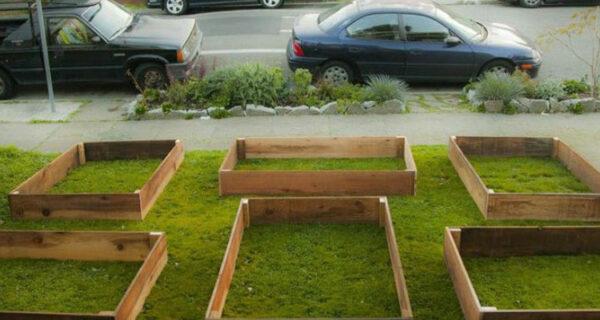 Всего за 60 дней этот парень вырастил крутой сад переддомом