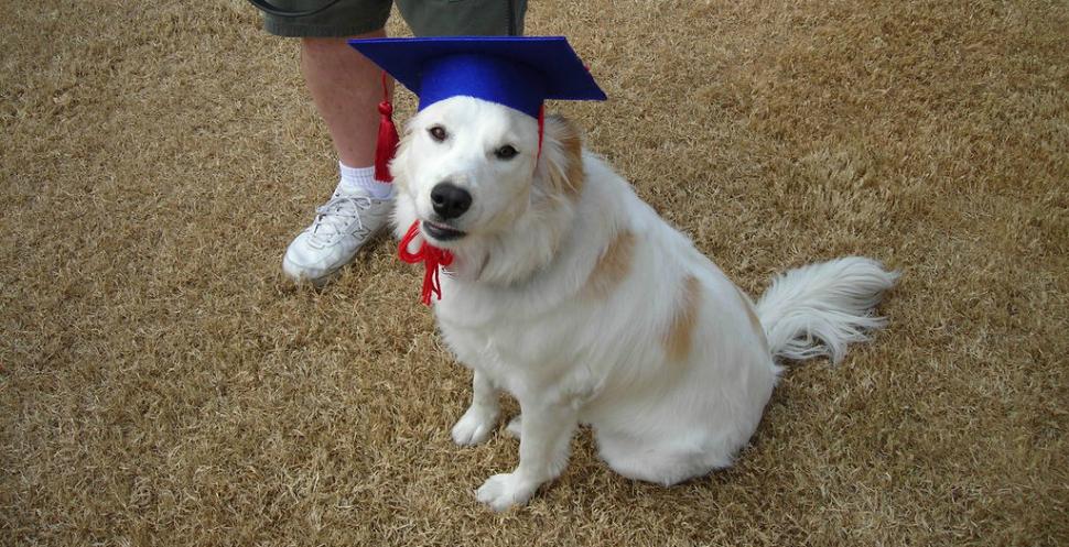 dogs-degree-970-head