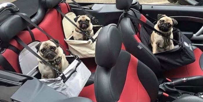 богатые собачки