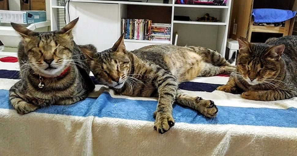 Слепое кошачье семейство наконец-то обрело дом