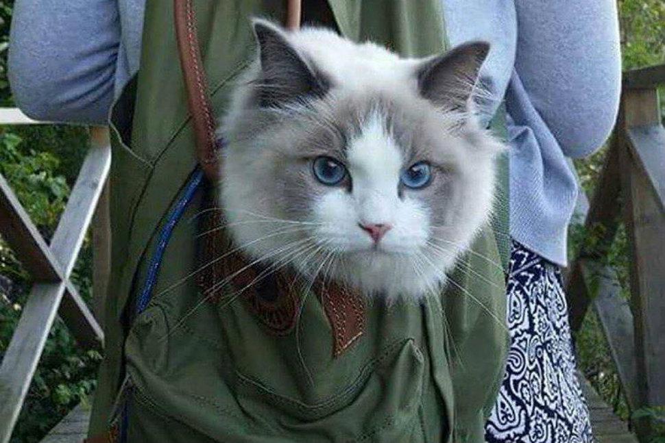 cats-camping-970-head-2