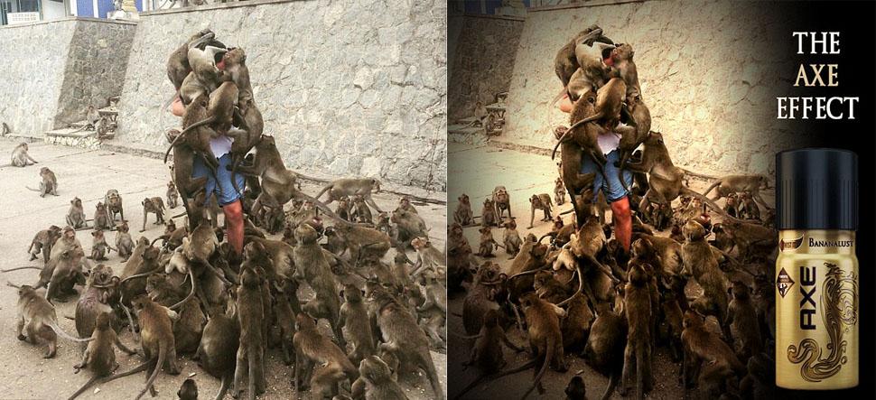 Турист решил покормить обезьян и стал героем интернет-мемов