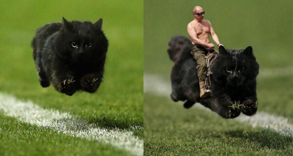 Черный кот выскочил на поле во время матча по регби и стал героем фотожаб