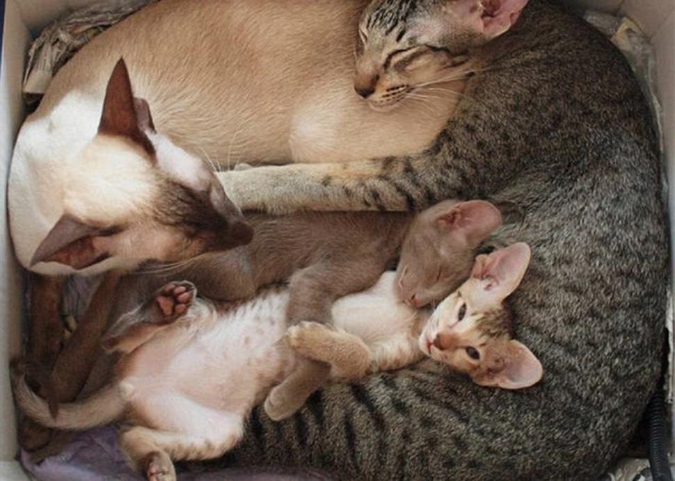 Коты учат, как правильно проводить время в кругу семьи