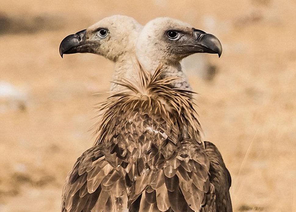 Фотограф случайно делает из диких животных мутантов