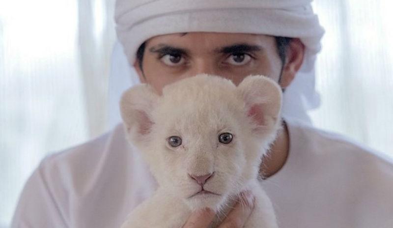 Член молодые арабы