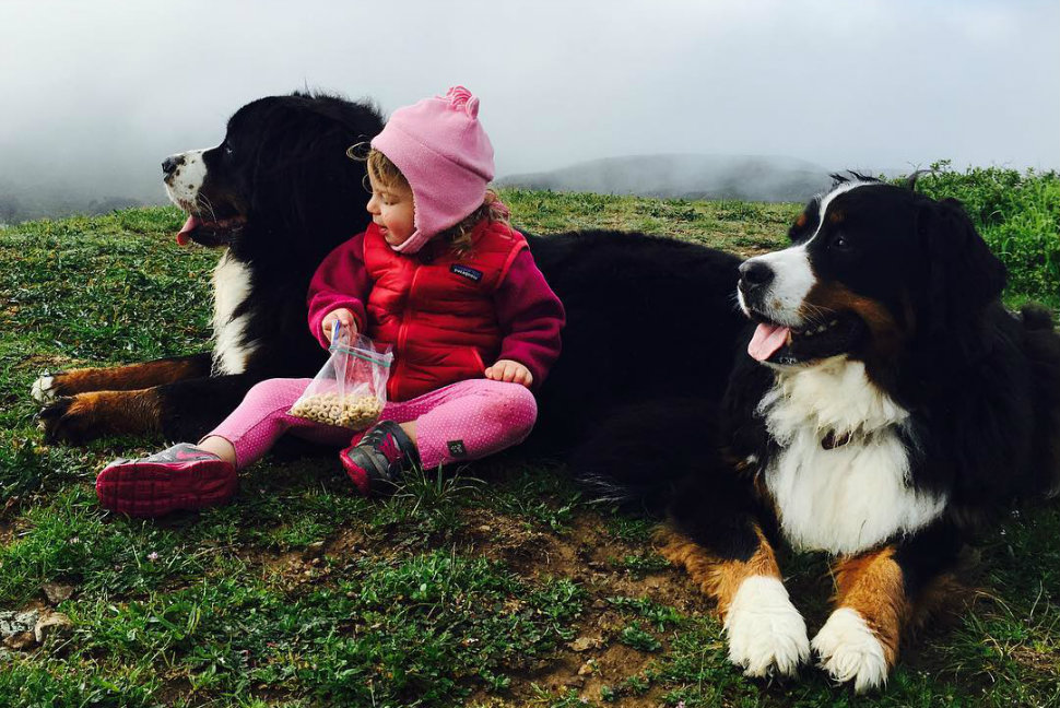 ruby-and-dogs-head-970