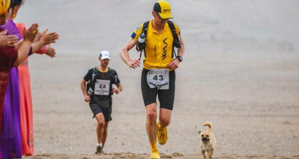 Бездомная собака пробежала за спортсменом 40 км во время марафона и обрела нового хозяина