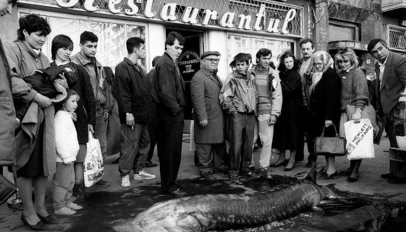 Суровая Румыния 90-х, где стада овец перегораживали оживленные улицы фото