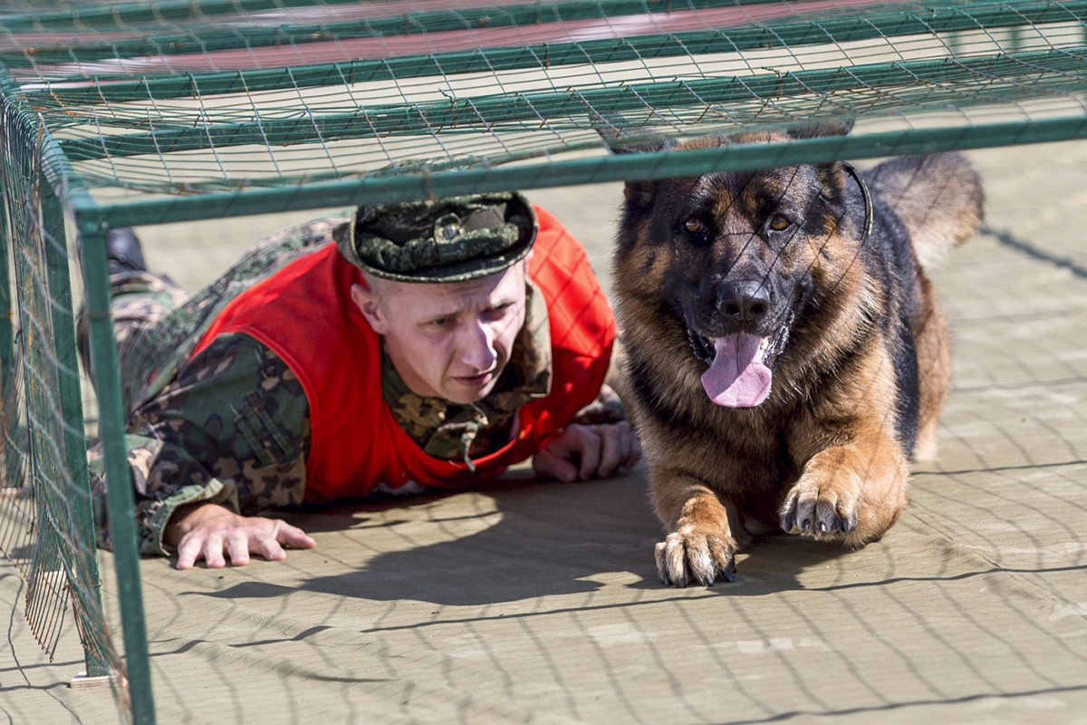 http://bigpicture.ru/wp-content/uploads/2016/08/a-military-working-dog-and-a-handler-perform-during-a-competition-outside-dmitrov-russia-on-august-6.jpg