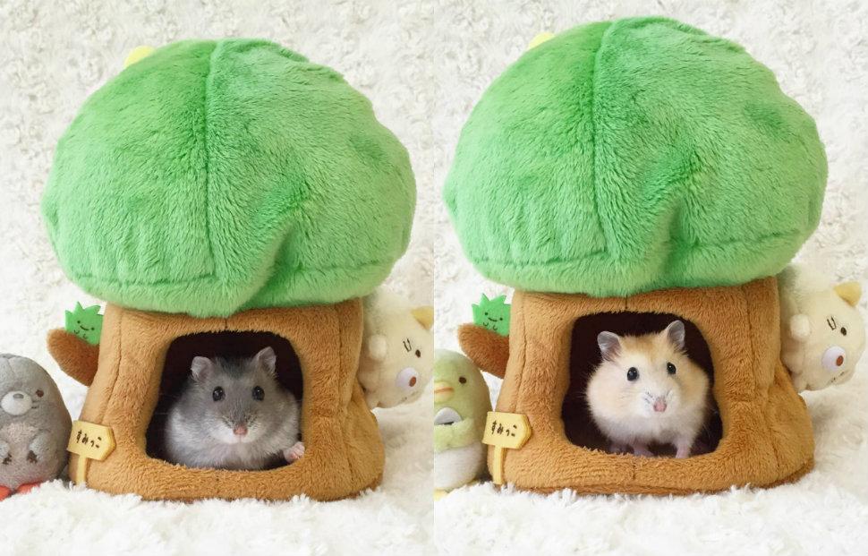 little-hamsters-970-head