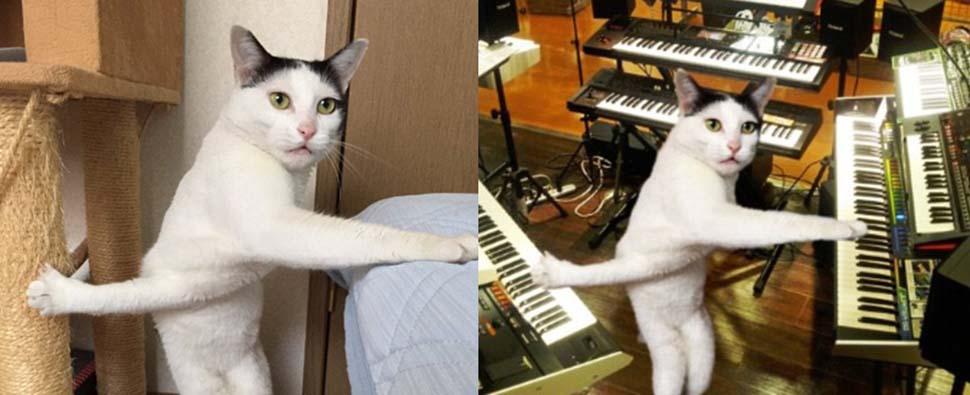 И днем, и ночью кот крученый: застрявшая кошка стала героем фотожаб