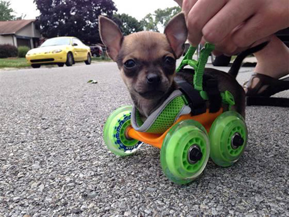 Изобретательные лайфхаки от владельцев собак
