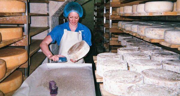 Сырная нора: один день из жизни бруклинского сыродела