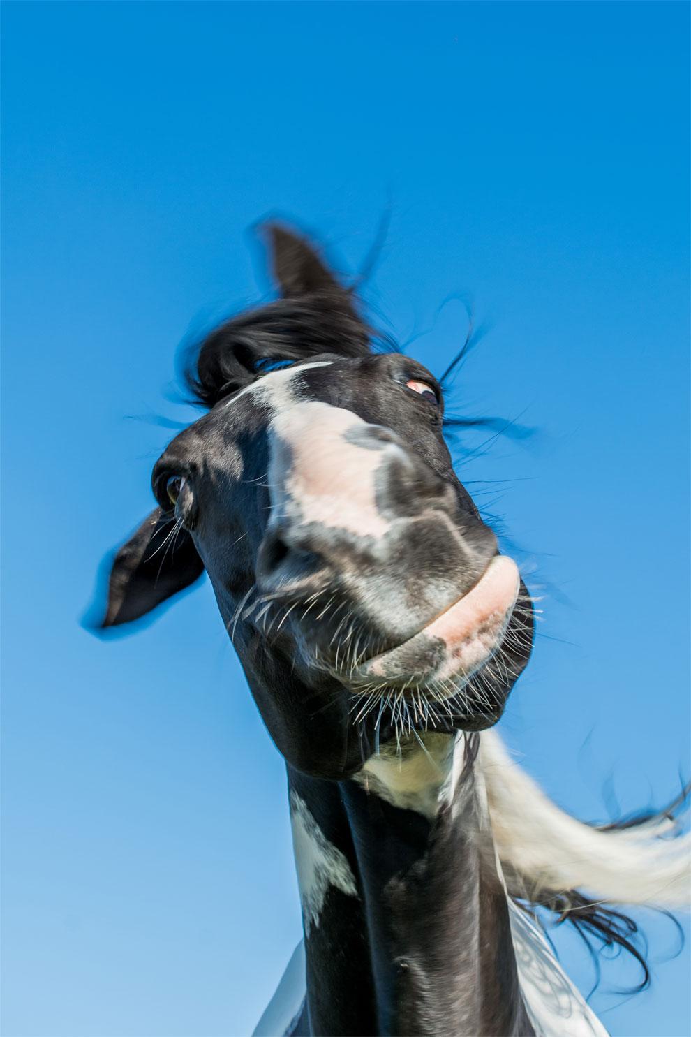 Картинка лошади приколы