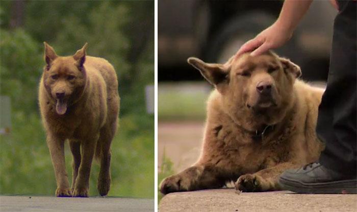 dog-4-mile-walk-to-town-bruno-longville-coverimage