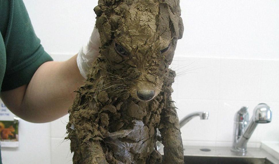 Даже ветеринары не сразу смогли понять, кто это, пока не отмыли