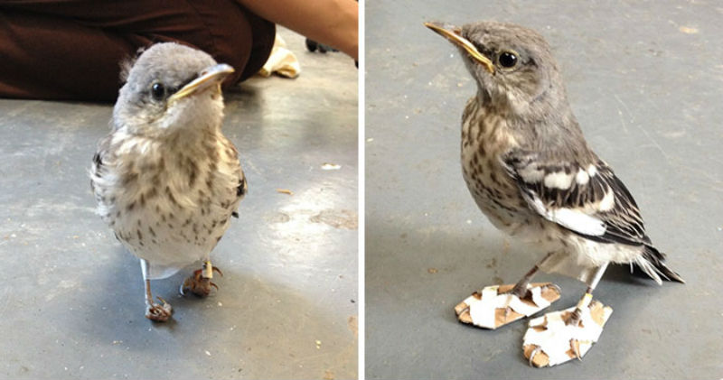 mockingbird-feet-problem-snowshoes-CWC-coverimage1