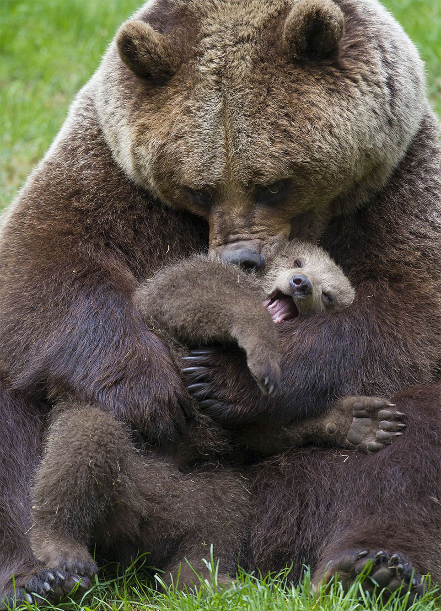 Spoon snow preventing: dear Mama bear teaching cubs wits