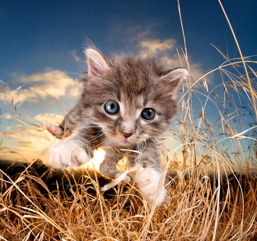 Прыгучие котята от фотографа Сета ...: bigpicture.ru/?p=820900