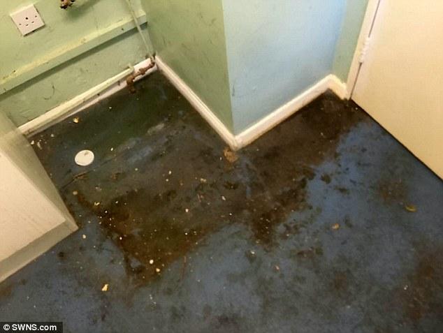 Британка, узнав, что пожилая соседка не убиралась и не мылась 13 лет, изменила ее жизнь