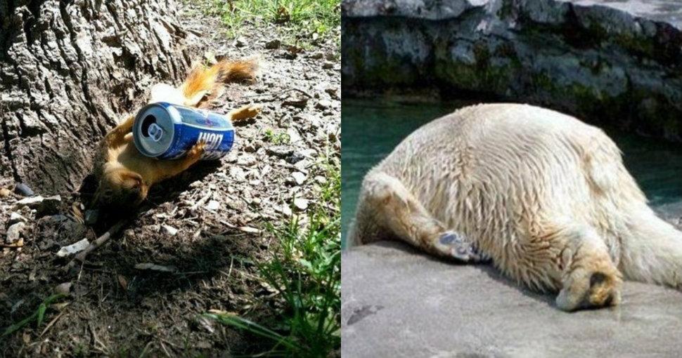 animals-hangover-970-head-2