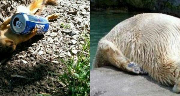 Эти бедные животные выглядят так, будто у них жесткое похмелье