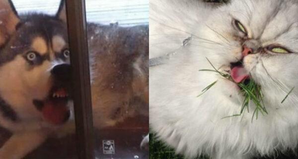 Улыбочку: если б животные могли говорить, они попросили бы вас удалить эти адские фото
