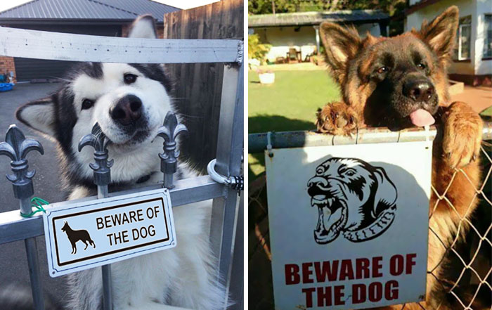 beware-Of-The-Dog-Signs-coverimage