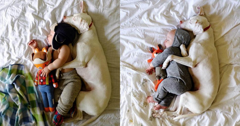 child-dog-sleep-970