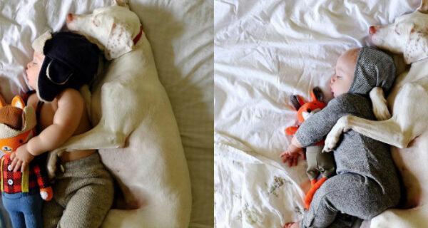 Восхитительные снимки спящих в обнимку малыша и спасенной от усыпления собаки