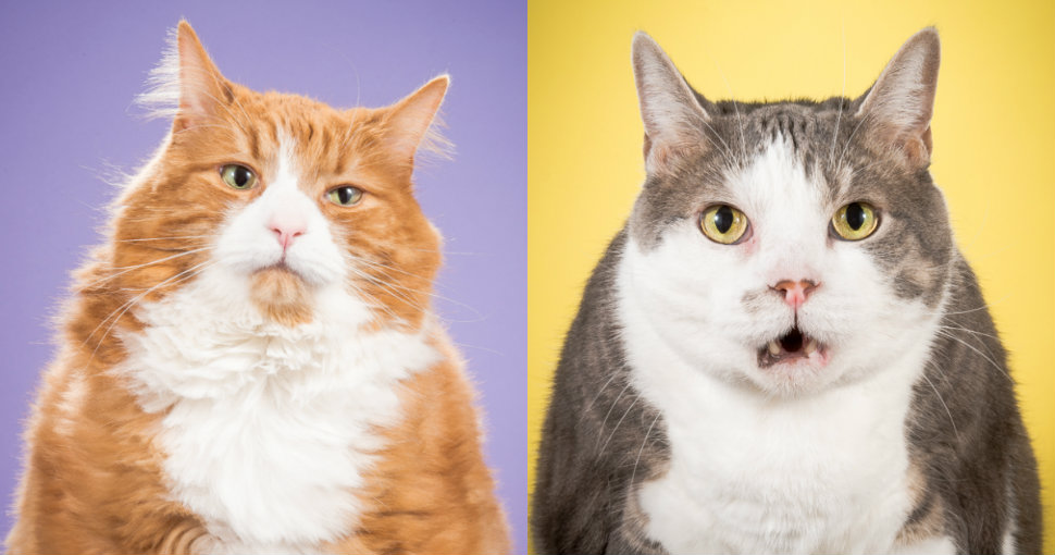 fat-cats-head-970