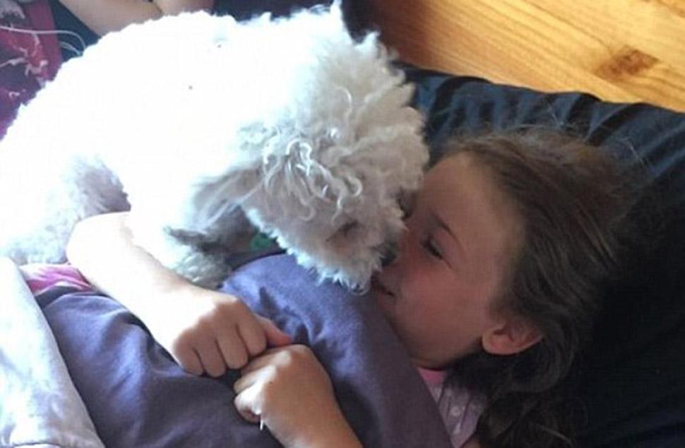 Пес предугадывает приступы маленькой хозяйки, больной эпилепсией