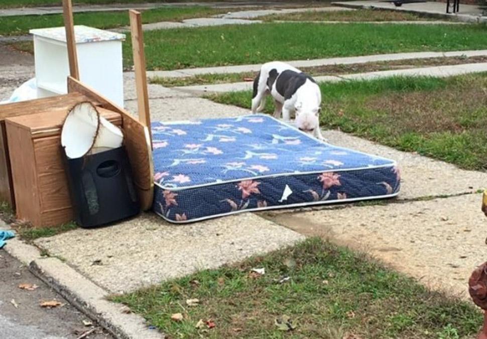 Брошенная собака месяц не могла поверить в то, что хозяева уехали навсегда