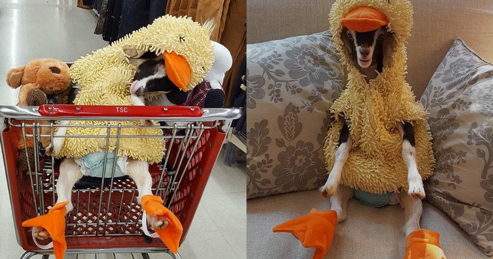 goat-duck-costume-head-1