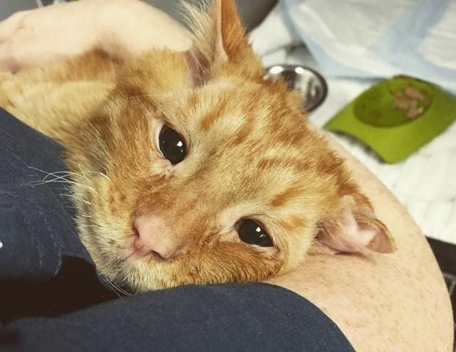 Самого грустного на свете кота взяли домой, и он преобразился