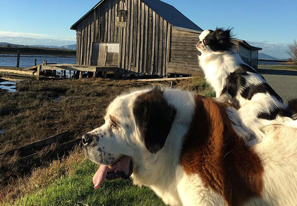Собака собаке — средство передвижения