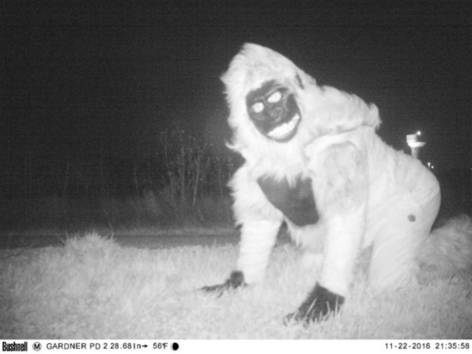 Полиция установила ночную камеру, чтобы найти пуму, но ситуация вышла из-под контроля