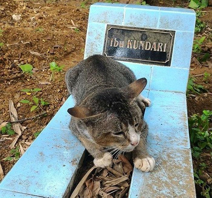 Кошка живет на могиле хозяйки