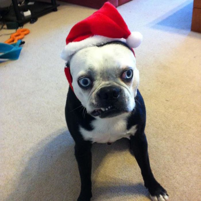 Animals that hate Christmas and New year