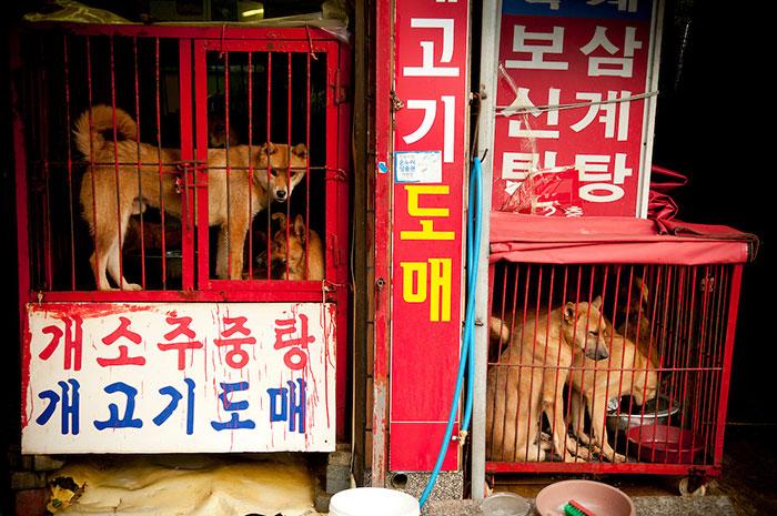 В Южной Корее закрыли крупнейший рынок собачьего мяса