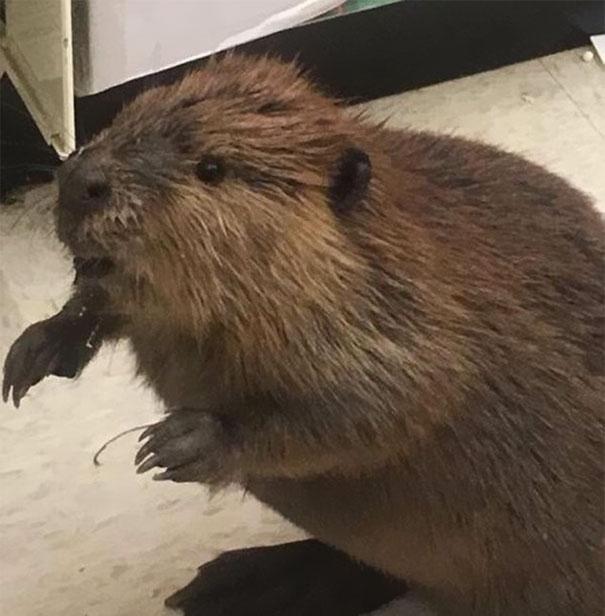 beaver-dollar-store-christmas-tree-shopping-3