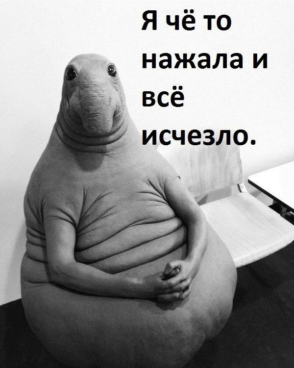 Ждун — самый милый мем 2017 года, фото-2