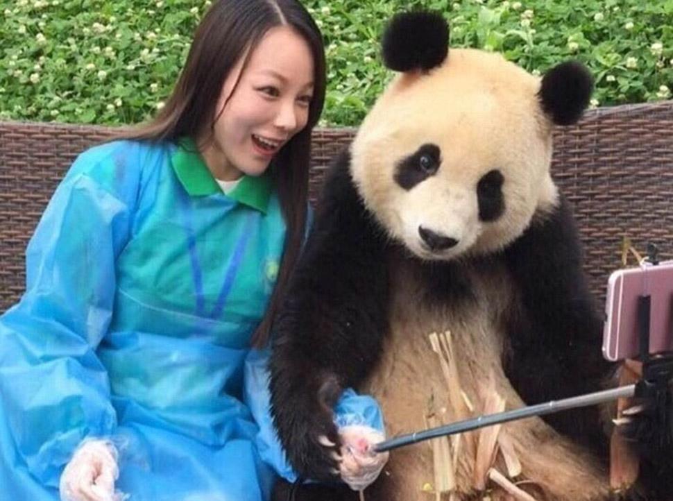 Панда, которая обставит любого по части селфи