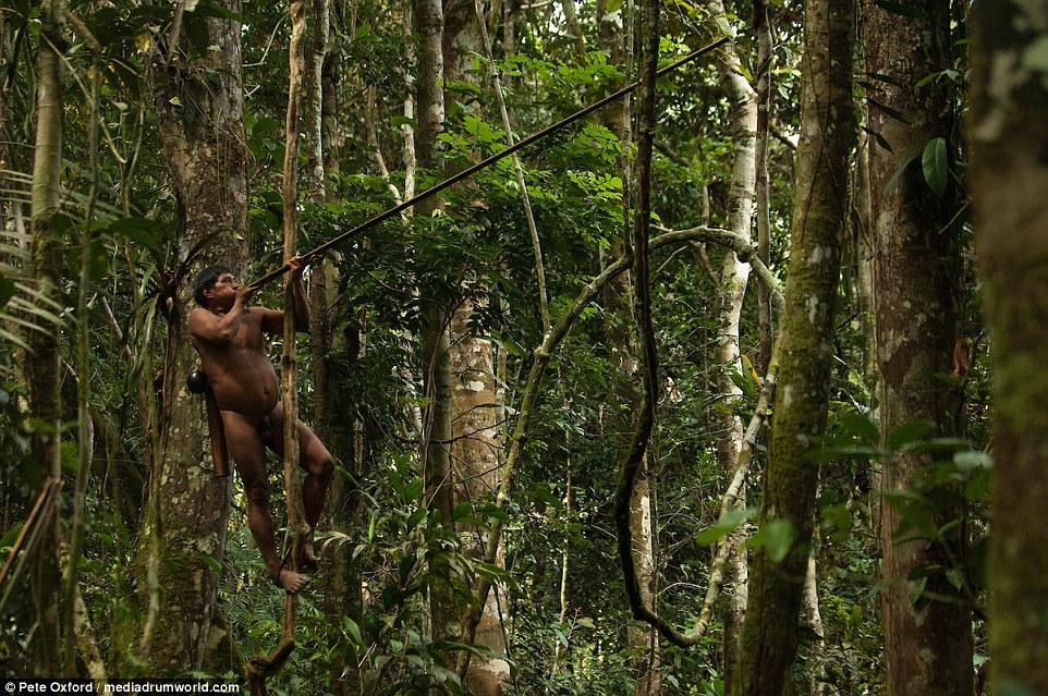 акции, возможность дикие лесные племена амазонки таможня