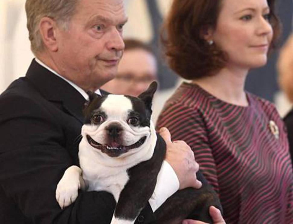 Пес президента Финляндии Ленну очаровывает интернет своей улыбкой