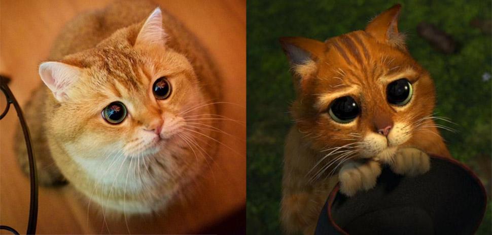 Хосико — настоящий живой Кот в сапогах