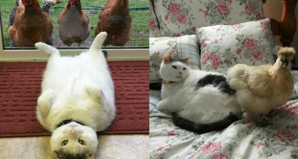 Instagram толстого кота, по которому цыпочки сходят сума